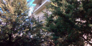 Реабилитационный центр «Афалина»