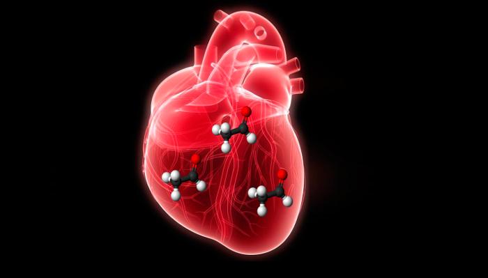 Алкогольные токсины в сердце человека