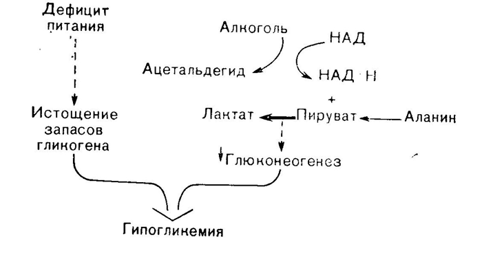 Схема образования гипогликемии