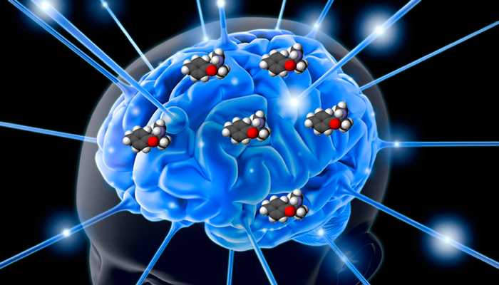 Воздействие мефедрона на центры удовольствия человека