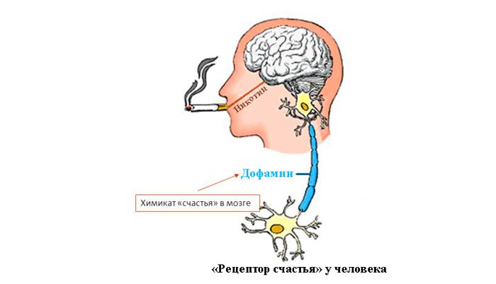 Принцип табачной зависимости