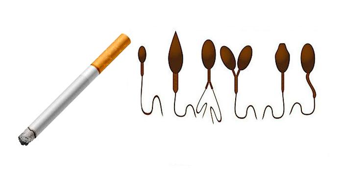 Аномальное строение сперматозоидов в следствии табачной зависимости