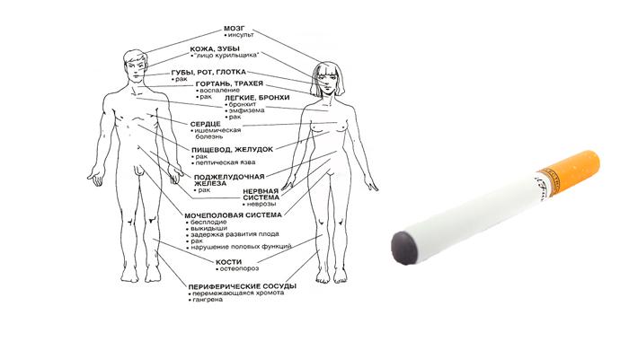 Органы страдающие от курения