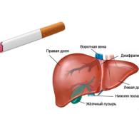 Как курение влияет на печень человека