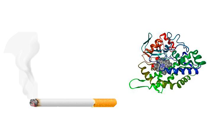 Выработка фермента Цитохрома P450 из-за курения