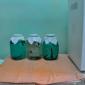 Пиявки для гирудотерапии в медицинском центре «Детокс плюс» (Элиста)