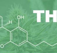 Тетрагидроканнабинол: воздействие на организм человека и возникновение зависимости