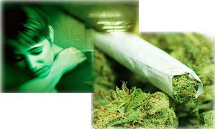 Злоупотребление марихуаной приводит к необратимым последствиям