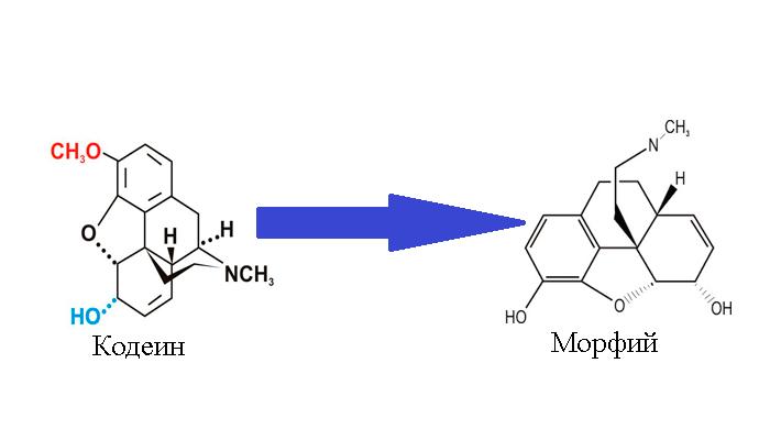 Преобразования кодеина в морфий в процессе употребления человеком