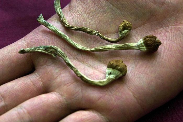 Псилоцибиновые грибы относятся к группе психоделиков