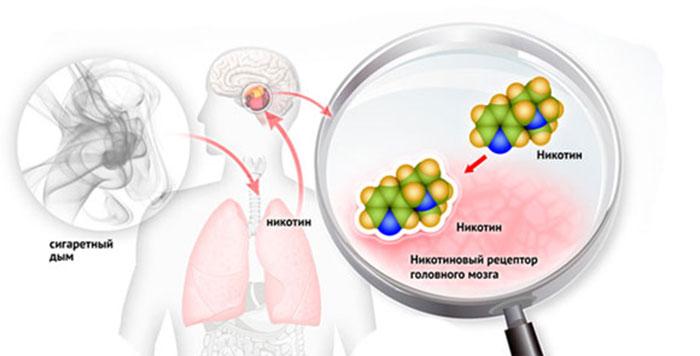 Принцип действия никотина на организм человека