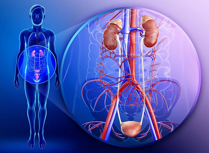 Монурал чаще назначают при заболеваниях мочеполовой системы