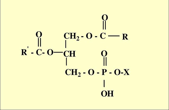 Фосфолипиды - общая структурна формула одного из действующих веществ препарата Фосфоглив