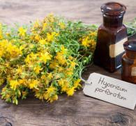 Зверобой от алкоголизма: лечебные свойства и как правильно заваривать растение