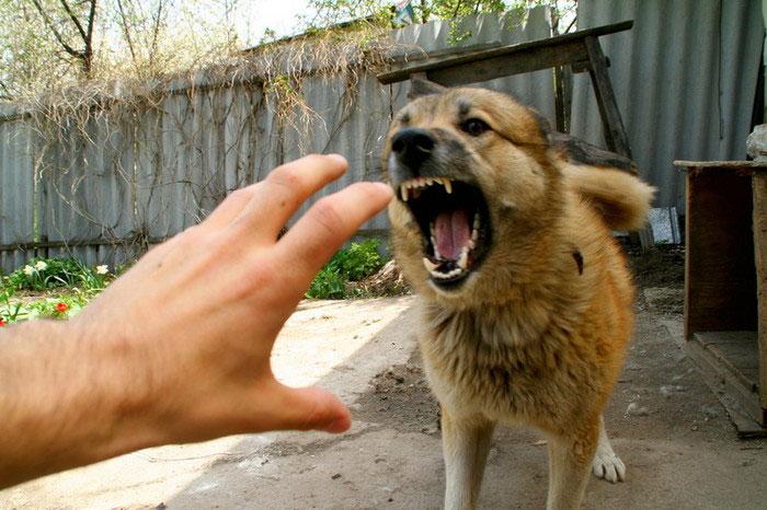 КОКАВ - лечебно-профилактическая иммунизация при укусах с животными, заражёнными бешенством