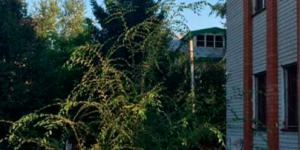 Центр реабилитации «Начало» (Тула)