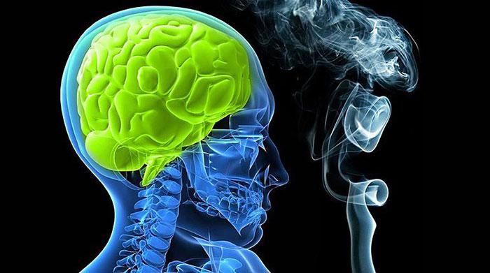 Регулярное употребление никотина негативно влияет на работу головного мозга
