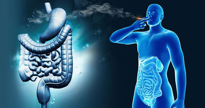 Табачный дым непосредственно негативно влияет на органы желудочно-кишечного тракта
