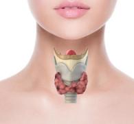 Алкоголь и гипотиреоз: можно ли спиртного при недостатке гормонов щитовидной железы?