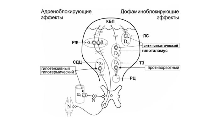 Механизм действия нейролептиков на мозг человека