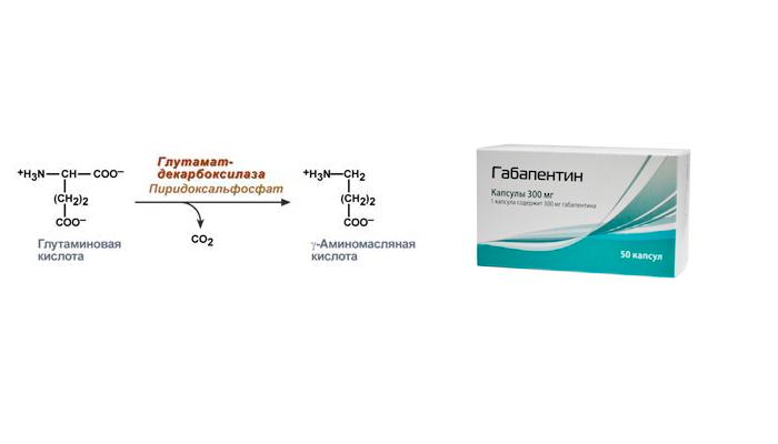Повышение синтеза ГАМК в ЦНС при употреблении Габапентина