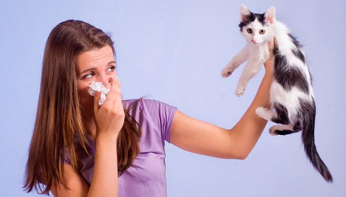Аллергическая реакция на шерсть кота