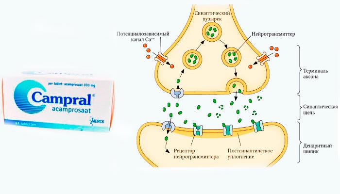 Подавление выработки нейротрансмиттеров препаратом Акампросат