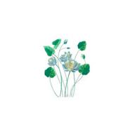 Голубой лотос: безобидное растение или природный наркотик?