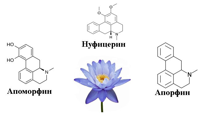 Алкалоиды входящие в состав Голубого лотоса