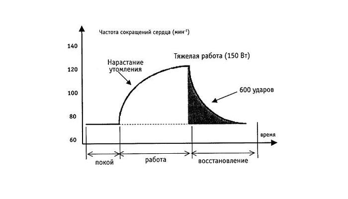 График частоты сокращения сердца человека