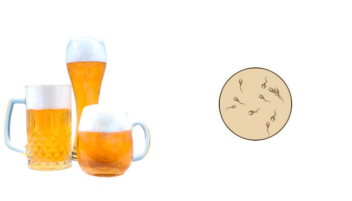 Влияние пива на подвижность сперматозоидов