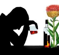 Левзея - растение для лечения алкоголизма