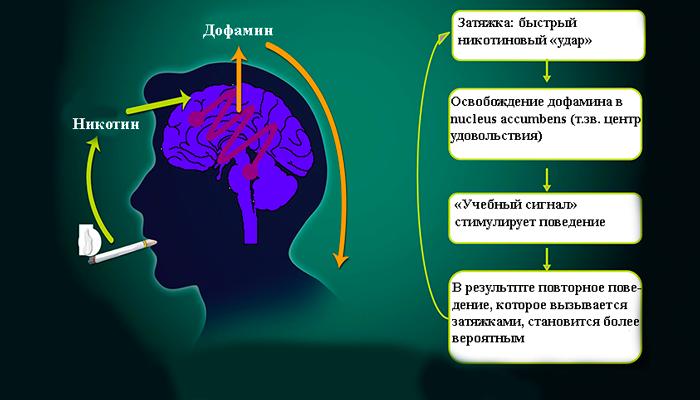 Схема развития никотиновой зависимости
