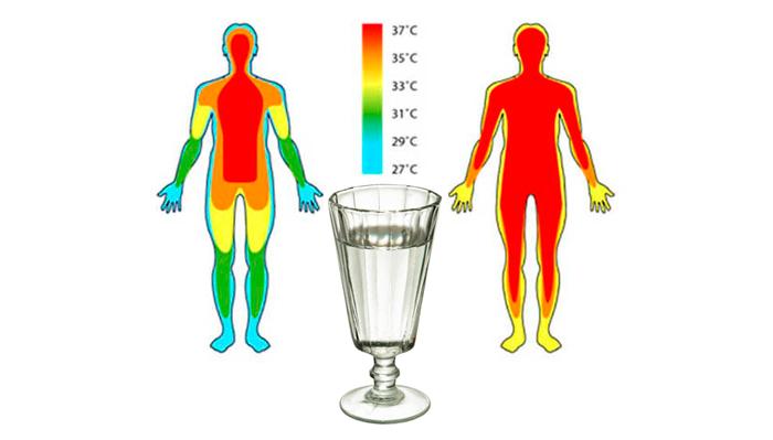 Вмешивание алкоголя в терморегуляцию человека