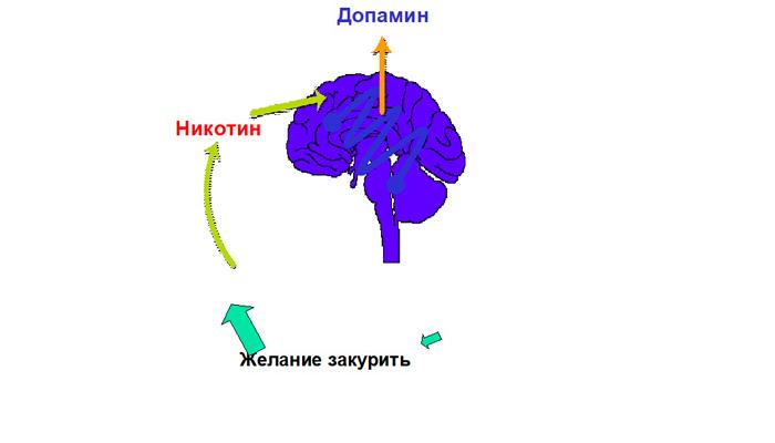 Схема никотиновой зависимости