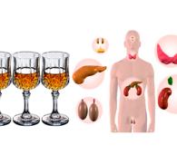 Алкоголь и эндокринная система: влияние спиртного на организм человека