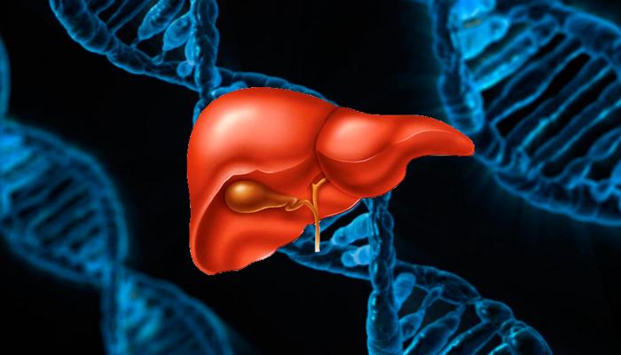 Генетическая предрасположенность к алкогольной интоксикации печени