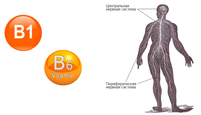 Улучшение работы неровной системы в следствии действия витаминов B1 b B6 входящих в состав препарата Алкофинал