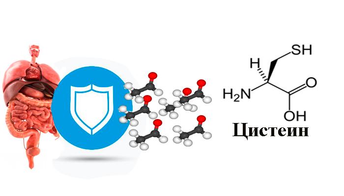 Защита внутренних органов от алкогольных токсинов благодаря веществу в составе лекарства Алкофинал Цистеин