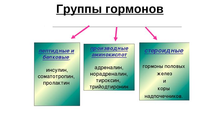 Группы гормонов в организме человека