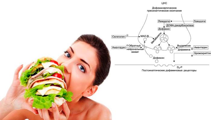 Активизация дофаминовых рецепторов во время приема еды