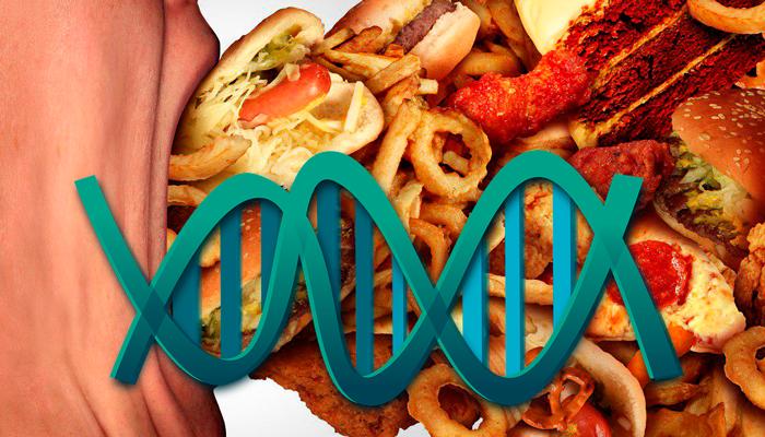 Генетическая предрасположенность компульсивного переедания
