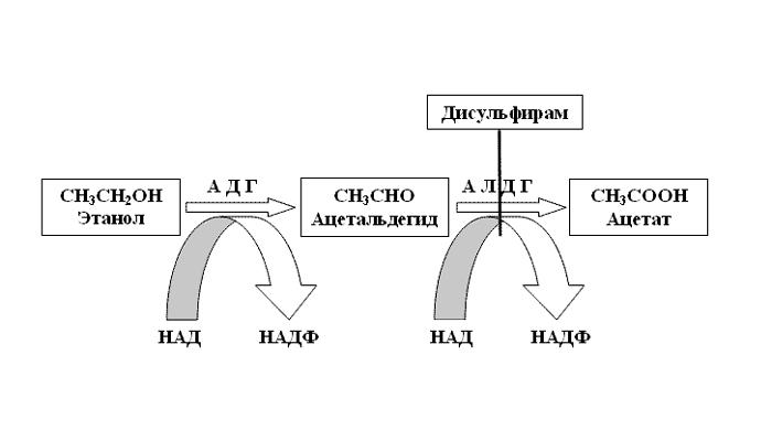 Схема действия дисульфирама при кодировании от алкогольной зависимости