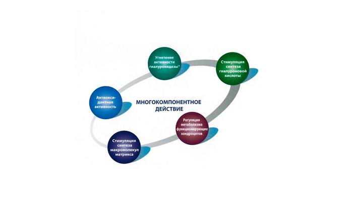 Механизм действия препарата Алфлутоп