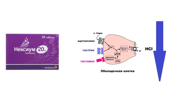 Угнетение секреции соляной кислоты с помощью лекарственного средства Нексиум
