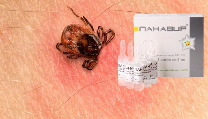 Применение инъекций Панавир при клещевом энцефалите