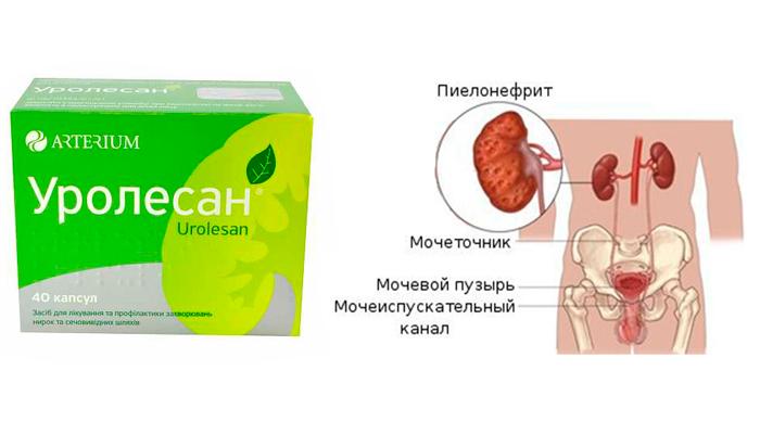 Применение препарата Уролесан при пиелонефрите