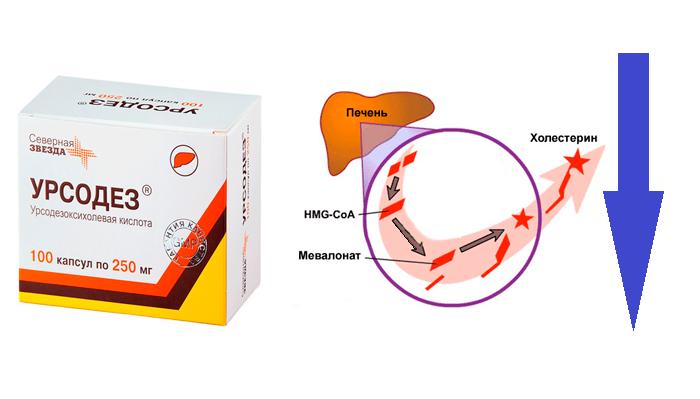 Снижение уровня синтеза холестерина в печени в следствии применения препарата Урсодез