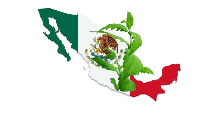Обитание растения Калея закатечичи в Мексике