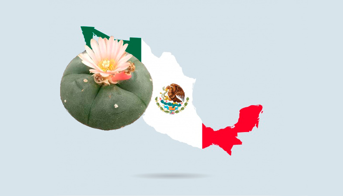 Обитание кактуса Lophophora Williamsii в Мексике